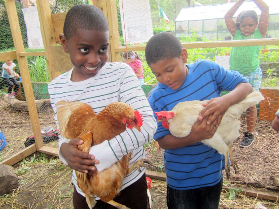 Brook Park Chickens